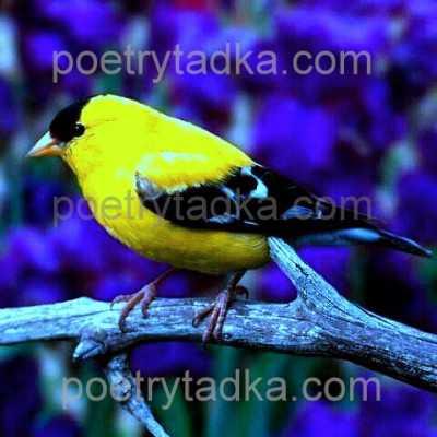sad shayari wallpaper whatsapp profile image photu in hindi